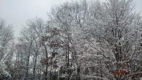 Sneeuw behandelde takken royalty-vrije stock afbeeldingen