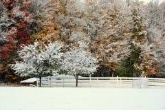 Sneeuw Behandelde Tuin en Bomen Royalty-vrije Stock Fotografie