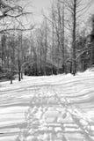 Sneeuw behandelde wandelingssleep Stock Foto