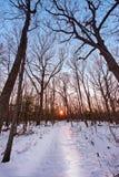 Sneeuw behandelde wandelingssleep door een bos naar een het plaatsen zon Royalty-vrije Stock Afbeeldingen