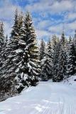Sneeuw behandelde weg stock foto's