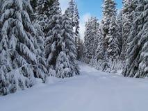 Sneeuw Behandelde Weg Royalty-vrije Stock Foto's