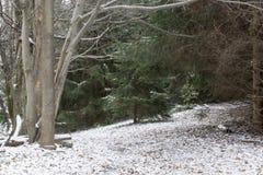 Sneeuw behandelde weg in bos royalty-vrije stock fotografie