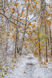 Sneeuw behandelde weg in bos in de vroege winter Stock Afbeelding
