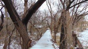 Sneeuw Behandelde Weg in de Provincie Texas van Wichita Stock Fotografie