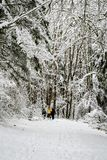 Sneeuw behandelde weg in een bebost de winterlandschap, mensen die weggaan royalty-vrije stock foto's