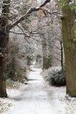 Sneeuw behandelde weg in een park stock afbeeldingen