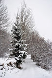 Sneeuw in bergen Stock Foto