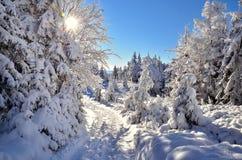 Sneeuw in bergen Royalty-vrije Stock Afbeelding