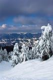 Sneeuw bergen en speldbomen Stock Fotografie