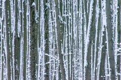 Sneeuw bespatte boomboomstammen in de winterbos als achtergrond Stock Afbeelding