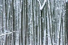 Sneeuw bespatte boomboomstammen in de winterbos als achtergrond Royalty-vrije Stock Afbeelding