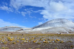 Sneeuw bij de Geisers Gr Tatio, in Atacama-woestijn, Chili stock foto