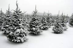 Sneeuw bij het boomlandbouwbedrijf Royalty-vrije Stock Afbeeldingen