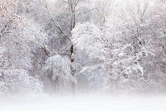 Sneeuw Bijeengekomen Bomen royalty-vrije stock fotografie