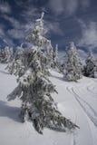 Sneeuw Bomen royalty-vrije stock foto