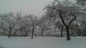 Sneeuw bomen Royalty-vrije Stock Afbeelding