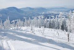 Sneeuw bomen stock foto's
