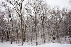 Sneeuw bomen Stock Fotografie