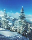 Sneeuw bomen Stock Afbeeldingen