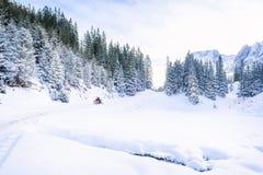 Sneeuw bomen en bergen Stock Foto's