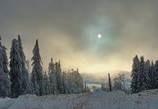 Sneeuw, bomen en bewolkte die hemel met zon gedeeltelijk door wolken wordt behandeld stock foto's
