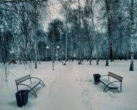 Sneeuw, bomen, hemel, berk, esdoorn, iep Royalty-vrije Stock Afbeelding