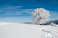 Sneeuw boom op een zonnige dag Royalty-vrije Stock Foto's