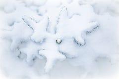 Sneeuw, Boom, Ster Stock Afbeelding