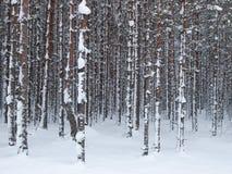 Sneeuw boomboomstammen Stock Foto