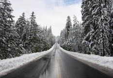 Sneeuw bos royalty-vrije stock afbeeldingen