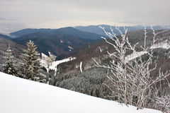 Sneeuw bos 2 Royalty-vrije Stock Fotografie