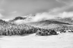 Sneeuw bos Stock Fotografie