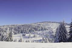 Sneeuw Bos Royalty-vrije Stock Foto