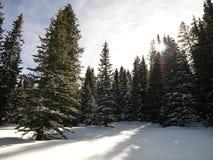 Sneeuw bos. Royalty-vrije Stock Foto's