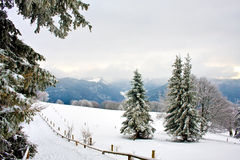 Sneeuw bos Stock Afbeeldingen