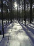 Sneeuw bos royalty-vrije stock foto's