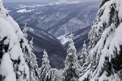 Sneeuw bos en de mening verder - de winterlandschap van Roemenië Royalty-vrije Stock Afbeelding