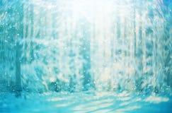 Sneeuw bosachtergrond stock foto