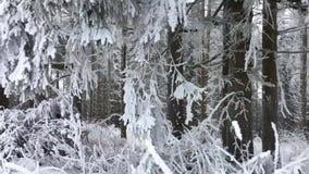 Sneeuw boslandschap in de bergen van Winterberg, Hochsauerlandkreis, Duitsland, populier en mooie vakantieplaats stock footage