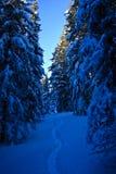 Sneeuw BosWeg Stock Afbeelding
