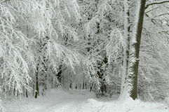 Sneeuw bosweg Royalty-vrije Stock Fotografie