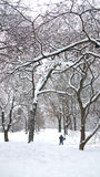 Sneeuw in Central Park New York Royalty-vrije Stock Afbeeldingen