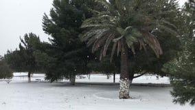Sneeuw dag in het park stock videobeelden