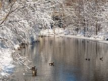Sneeuw day2 stock foto