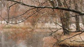 Sneeuw, de herfst stock videobeelden