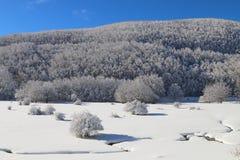 Sneeuw & de Winter Stock Afbeelding
