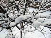 Sneeuw in de winter stock foto