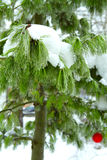 Sneeuw de winter bosfee Stock Afbeeldingen