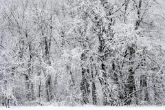 Sneeuw de winter bosscène Stock Foto